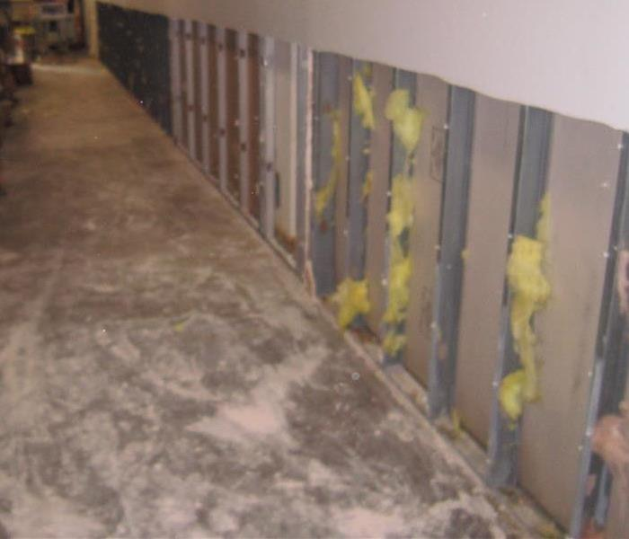 Dealing with Mold Growth Fast!